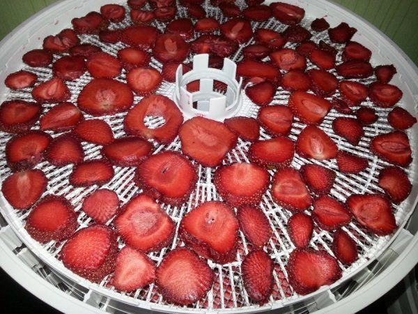 ezidri-strawberries-dried-4-hours_01