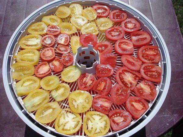 pomidory-pered-sushkoy-v-ezidri-ultra-1000-web